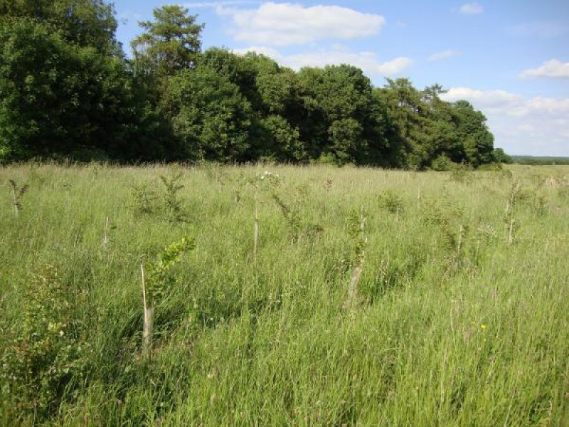 Thorney Coppice Antalis Forest Carbon - Carbon Offset